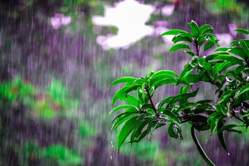 Husk regnskoven
